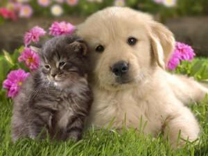 питание домашних животных