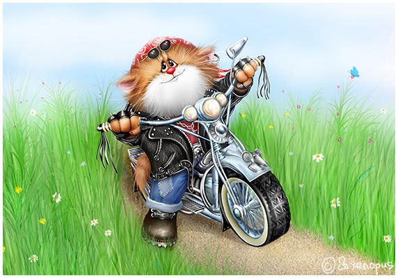 прикольные и смешные рисунки котов ксенопуса (Xenopus) | Всё для ...