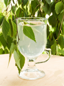 березовый сок польза, сбор березового сока