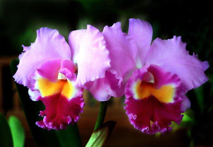 как ухаживать за орхидеями4